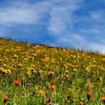 Abbiamo il diritto di nutrirci di piante e respirare (uccidendoli) batteri?
