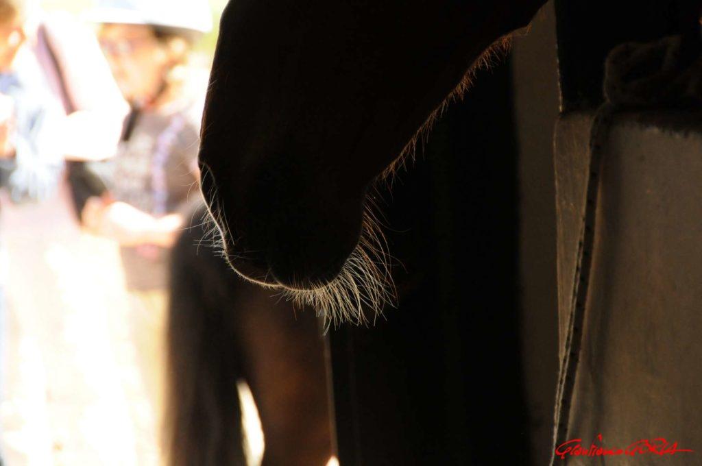 barba di caval Donato - foto Gianfranco Goria