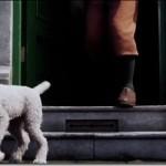 Tintin di Spielberg: il trailer in italiano