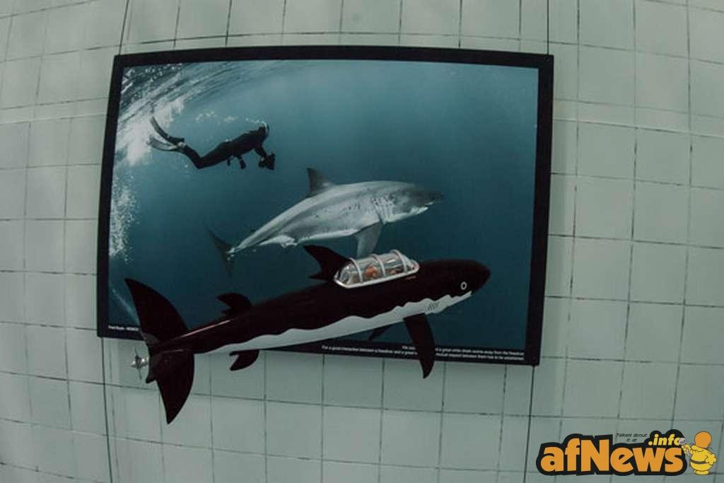 http://en.tintin.com/news/index/rub/0/id/4409/0/underwater-reporter
