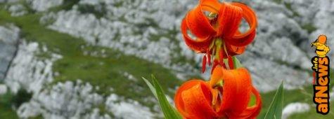 Il Fumetto e la Montagna tra le Dolomiti Friulane